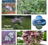 Pollinator Seeds