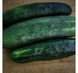 Organic Cucumber Seeds