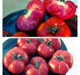 Organic Tomato Seeds