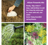 Allium Combination