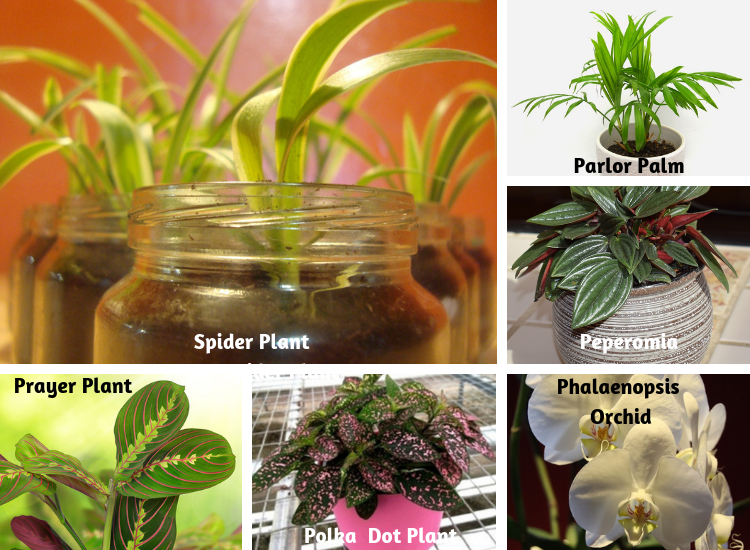 Non-Toxic Houseplants For Cats & Dogs   Indoor Gardening ... on tropical house plants, beach house plants, blue house plants, plants house plants, prehistoric house plants, river house plants, dessert house plants, fruit house plants, cactus house plants, desert yucca plant, sunset house plants, lake house plants, california house plants, desert plant identification, prairie house plants, forest house plants, jungle house plants, alpine house plants, coffee house plants, black house plants,
