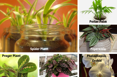 Non-Toxic Houseplants For Cats & Dogs | Indoor Gardening ... on green house plants, purple house plants, blue house plants, lavender house plants, tropical house plants, moss house plants, orange house plants, evergreen house plants, easy to take care of house plants, cacti house plants, flowers house plants, dead house plants, perfect house plants,