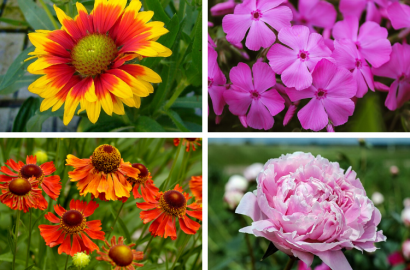 Summer Blooming Perennials Flowers Plants Gardening Blooming