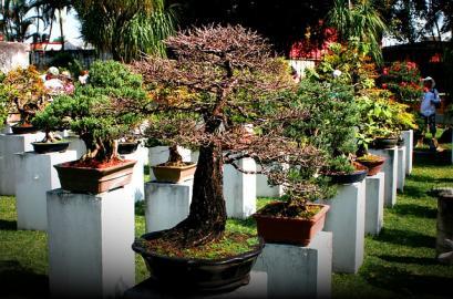 Growing Bonsai Tree Miniature Plants Indoor Gardening Blooming Secrets