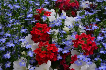 Color Container Combinations Containers Gardening Blooming