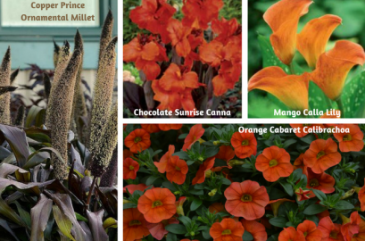 Color Combos For Containers Flowers Plants Gardening