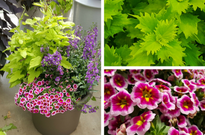 Pink And Green Color Combos Flowers Plants Gardening Blooming