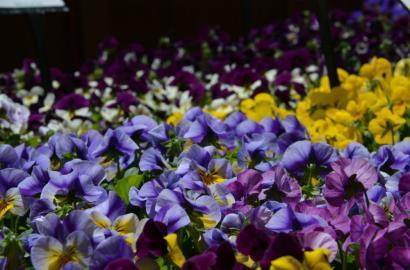 What Is A Biennial Flowers Gardening Blooming Secrets