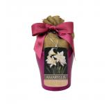 Jewel Amaryllis Grow Kit