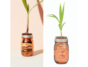 Palm Tree Garden Jar