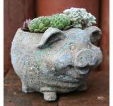 Pig Planter 5 Inch