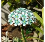 Solar Hydrangea Stake–Blue