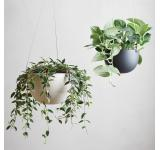 Beige Hanging Pot-7 Inch