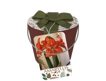 Tinkerbell Grow Kit