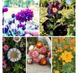 Organic Flower Mix