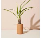 Palm Terracotta