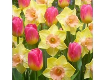 Sweet Treat Spring Blend