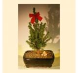 Bonsai Holiday Tree
