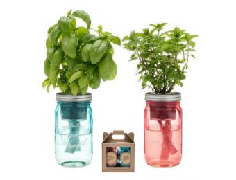 Basil & Mint Garden Jar