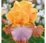Grand Canyon Sunset Iris