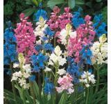 Wood Hyacinth Mix