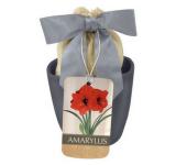 Red Lion Amaryllis Kit