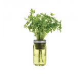 Organic Parsley Jar