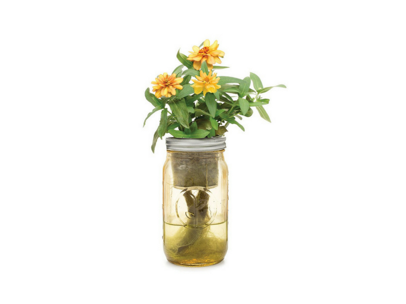 Awesome Zinnia Garden Jar