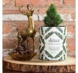 Spruce Grow Kit