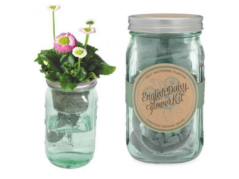 English Daisy Garden Jar